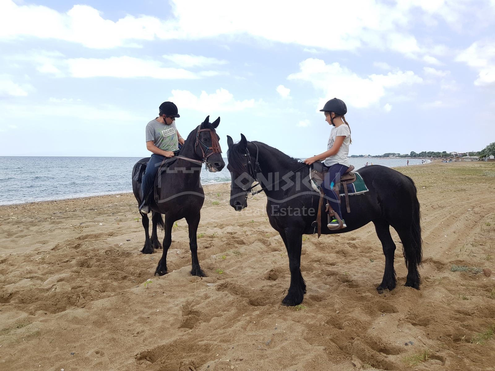 Dionisiou Real Estate Horse Riding Club In Halkidiki